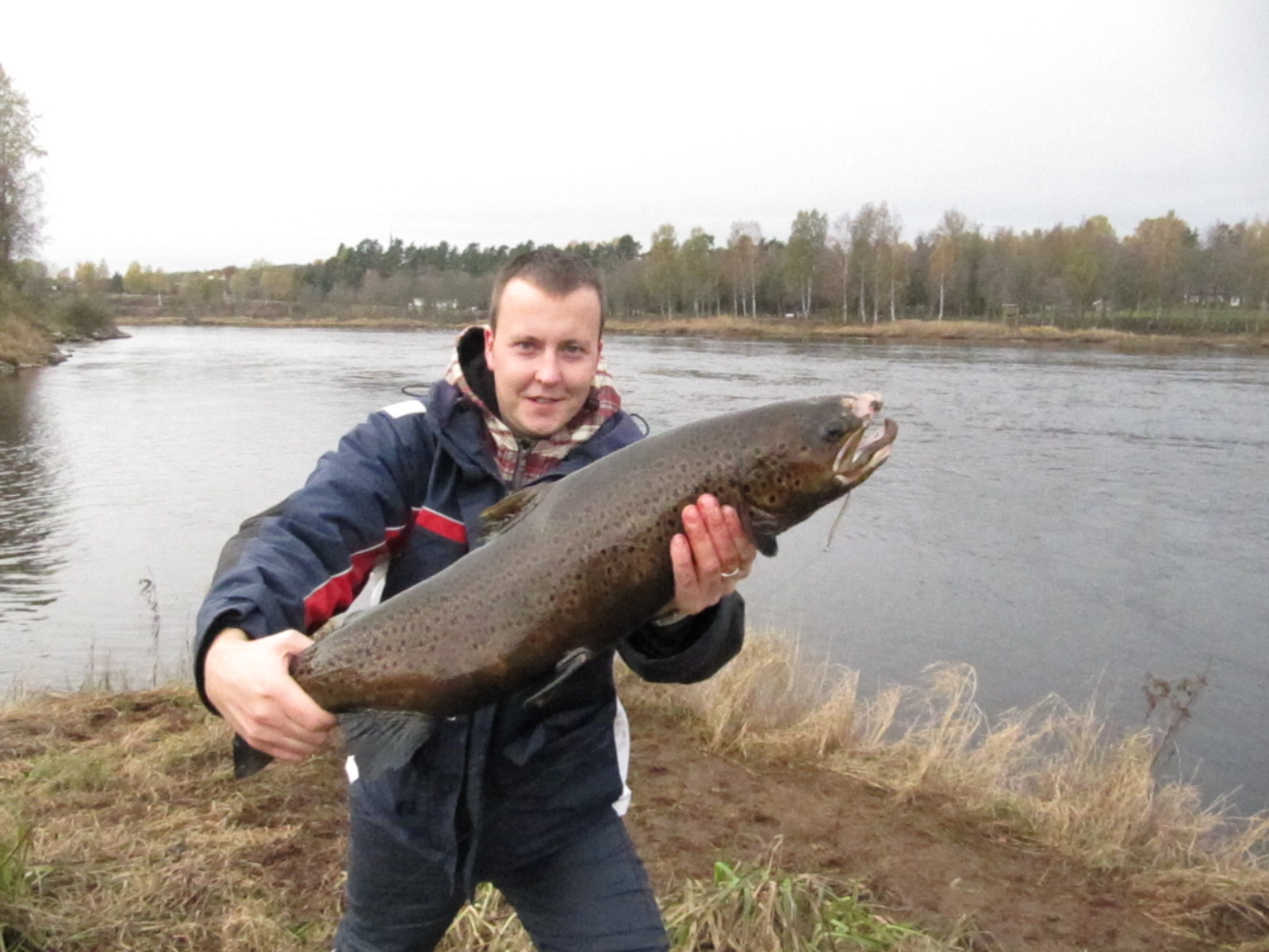how to catch salmon in sweden